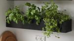 Rafraîchir une cuisine en installant des plantes aromatiques - Nantes 44